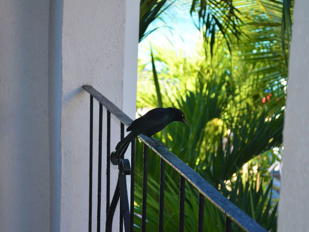 Seashore-balcony-guest